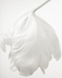 井津由美子写真展「Secret Garden」