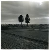 村越としや写真展「木立を抜けて」