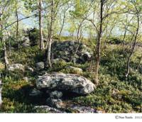 津田 直 写真展「NORTHERN FOREST」