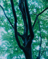 広川智基写真展「密雨-mitsu-」